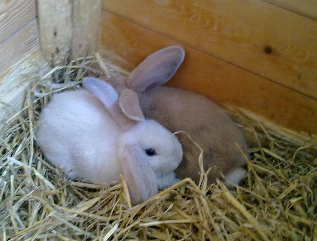 Mine nye kaniner